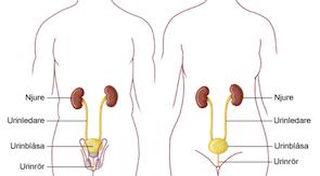 urinvagsinfektion2